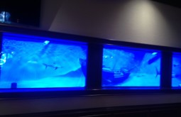 Shark Tank Mural On Plastic - Submerged In Tank